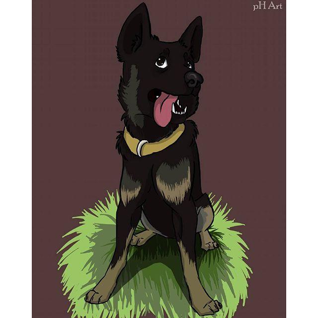 #джейк #пес #собака #милашка #черныйпес #чернаясобака #красивыйпес #люблюмоюсобаку  #hi #cute #dogsofinstagram  #dog #cutedog #lovemydog #jake #dogsforever #brave #instadog