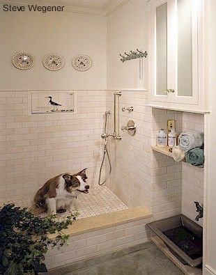 Great idea for a mudroom / dog room? (I knew this would be great...they have the best kind of dog modeling in the shower!)