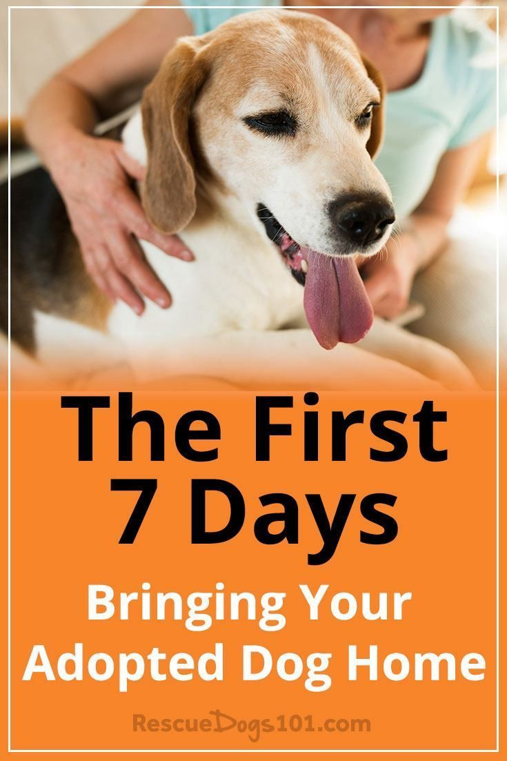 The First 7 Days Bringing Your Adopted Dog Home Dogs Rescue