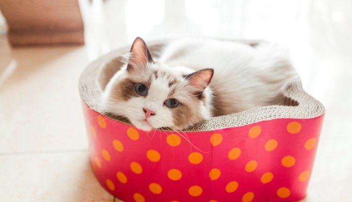 manufacture corrugated cat lounge, cat scratcher, cat bed, cat house, cat toys etc