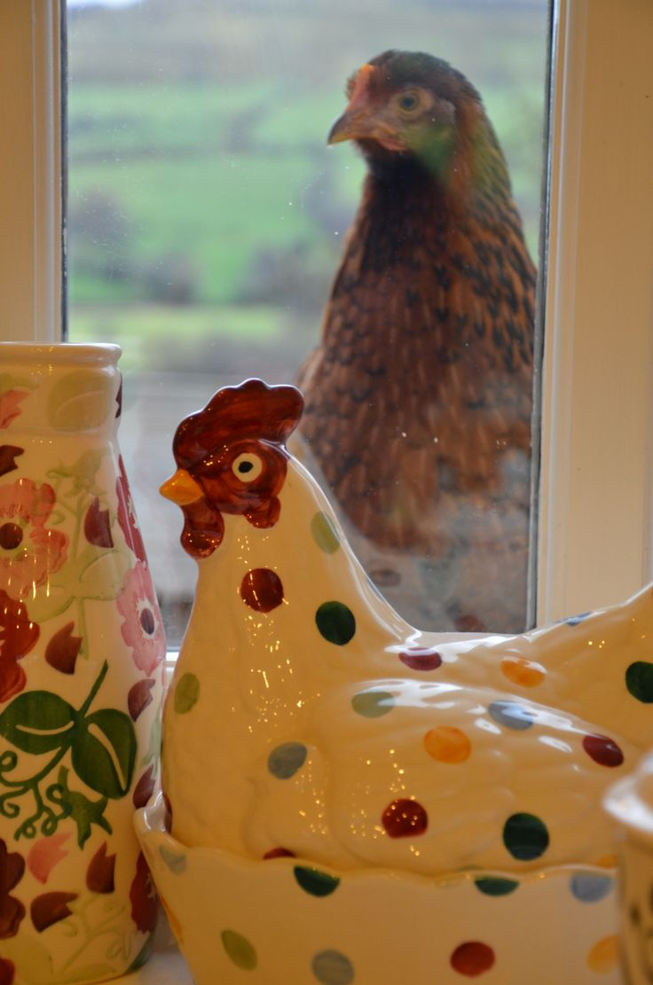 When Fantasy becomes Reality ~ Welsummer Hen looking through Window at Emma Bridgewater Polka Pottery Hen ....