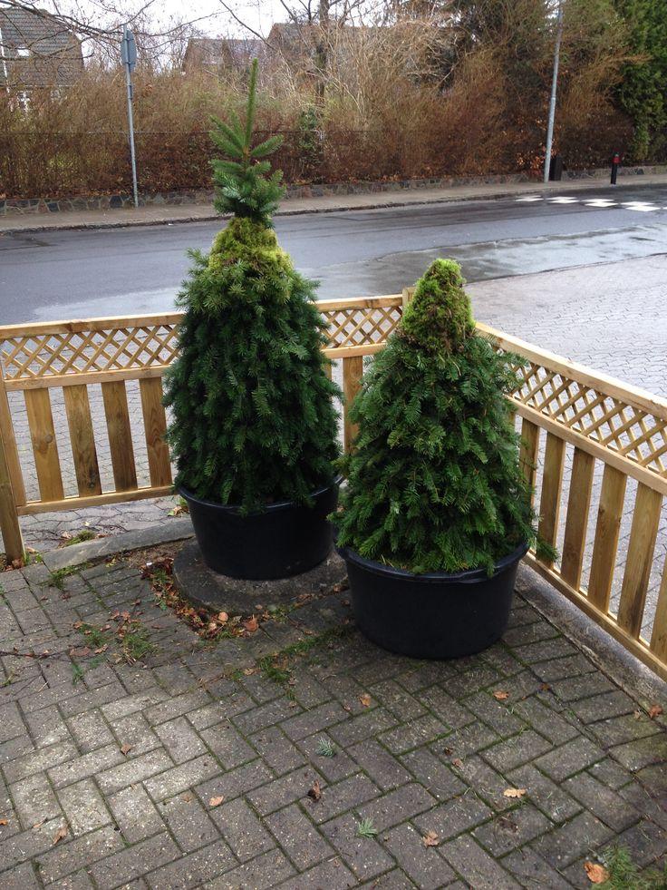 Juletræer lavet af hønsenet, ståltråd og tre kraftige pinde (pr træ), gran og mos fundet i skoven. Alt sammen sat ned i to potter med afblomstrede hostaer, som i øvrigt kom fint igen i foråret ;)