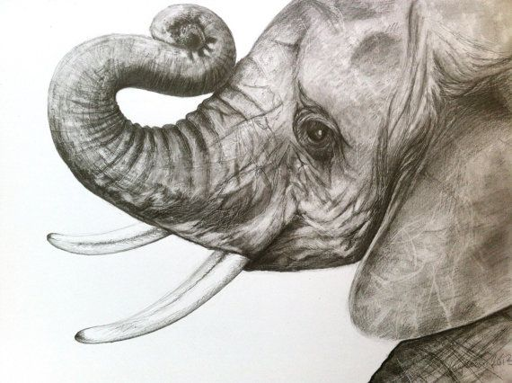 Baby Elephant Original Pencil Drawing by Lucy by CaughtByTheLight, $120.00