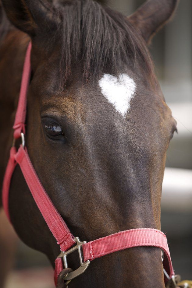 Horse with a heart on its forehead. | For the love of ...