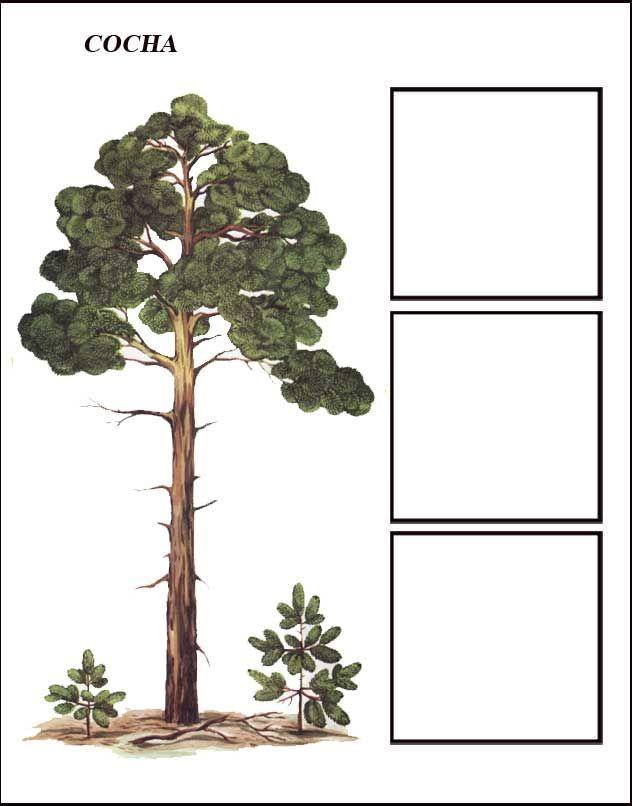igra-derevya-sosna-1.jpg (632×806)