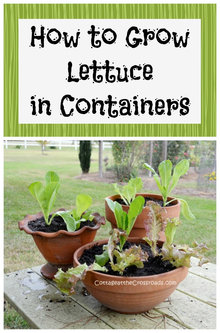 images about gardening on pinterest