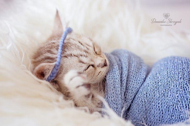 Newborn photo ideas. Blue photo prop. Newborn cat photo idea :) More photos on the website :)