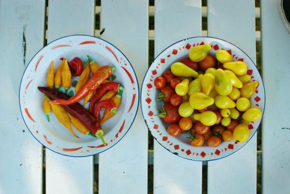 Chilies y tomates en este huerto de Dinamarca.