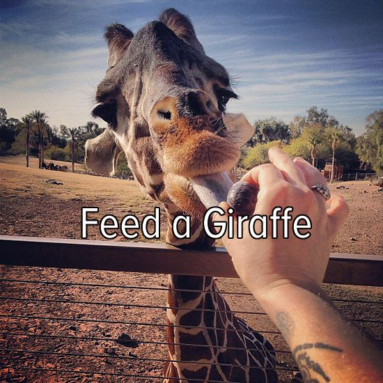 Bucket list: feed a giraffe!--because who would turn this down? How cute are they though! :)