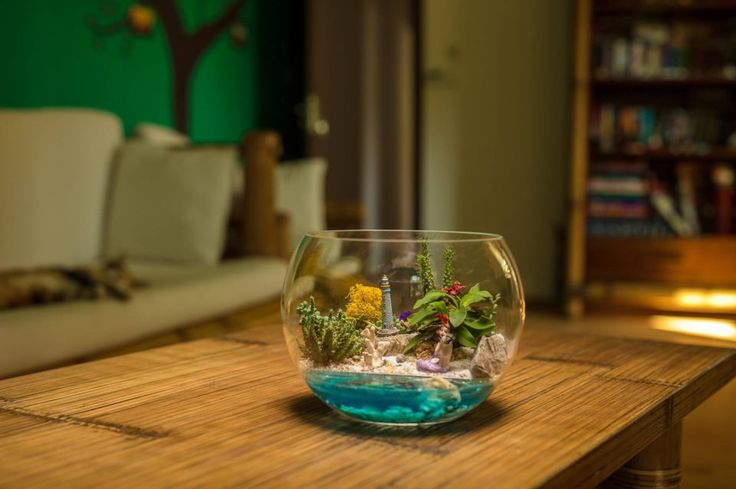 Terariu plante, decoratiune plante suculente