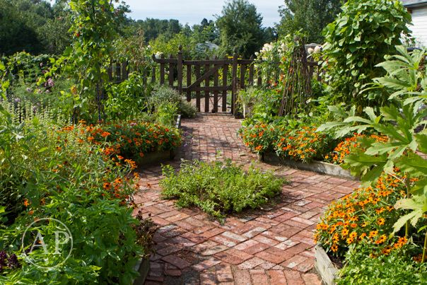 The backyard potager.: Potager Garden