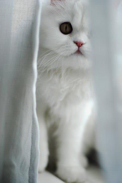cat | via Facebook on @We Heart It.com - http://whrt.it/16qhuus