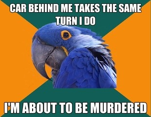 ObviouslyParrots Memes, Life, Laugh, True, Funny Stuff, Humor, Things, Paranoid Parrots, Macaw