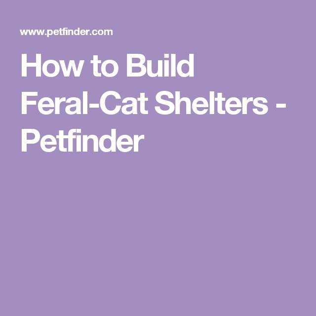 How to Build Feral-Cat Shelters - Petfinder