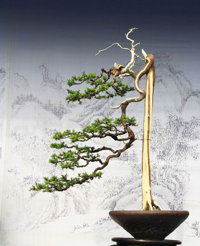 186 best images about bunjin literati style on pinterest for Literati bonsai gallery