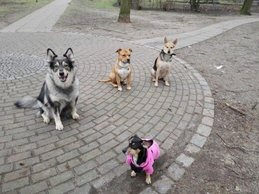 Buddy & the Gang