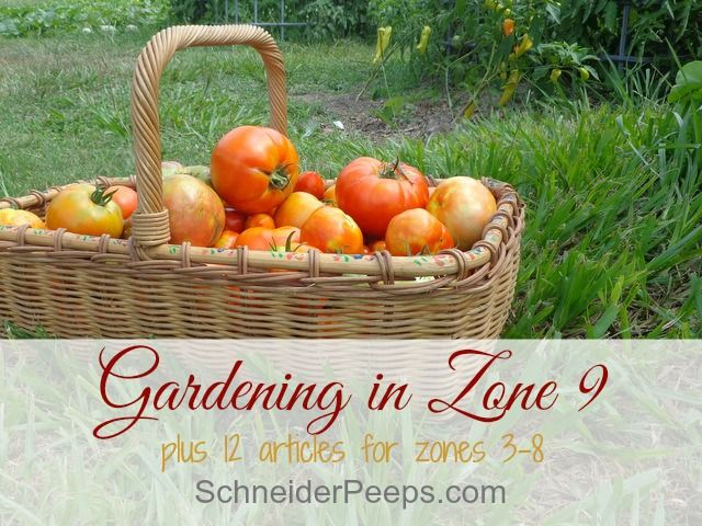 Gardening in zone 9 is a year round project. Learn what to plant and harvest each month, plus what to do in the dead of summer. Plus tips for other zones.