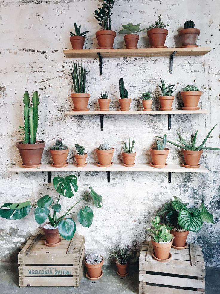 Cactus verzameling tegen onbewerkte industriële muur
