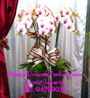 Bunga Anggrek Bulan - Phalaenopsis Orchid | Toko Bunga by Florist Jakarta