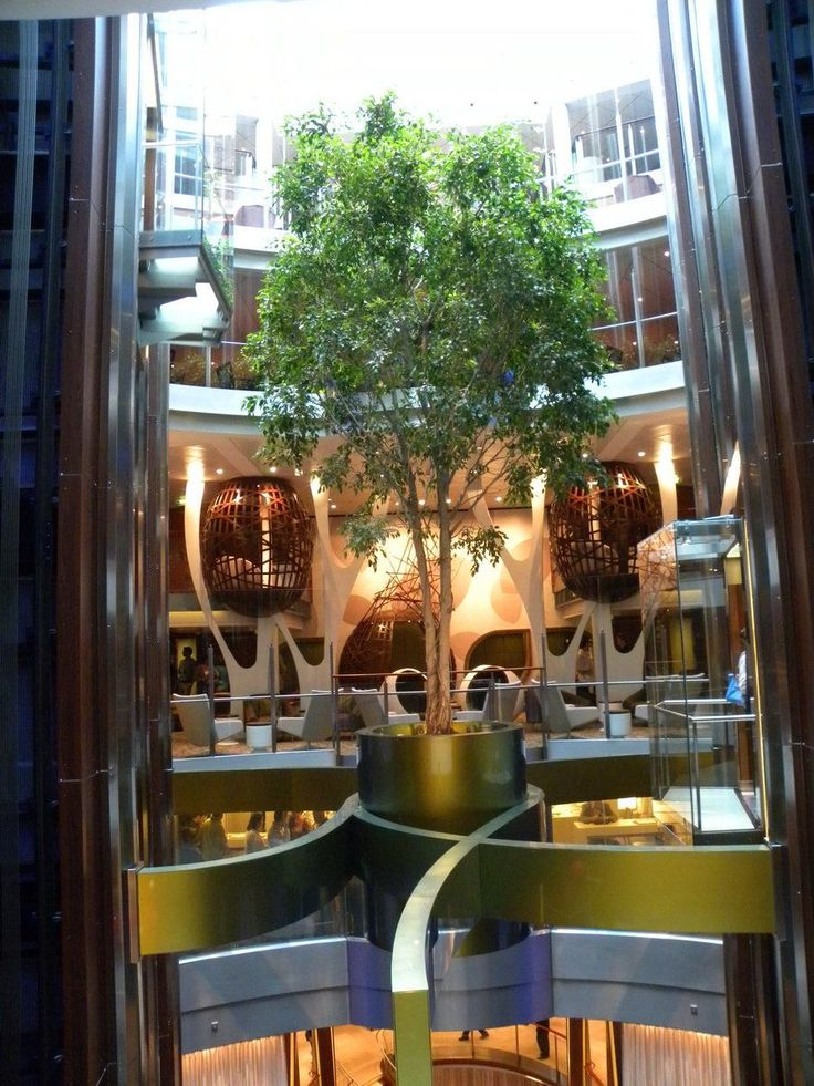 Celebrity Solstice Class ships all have a 20 ft ficus tree suspended in the mid-ship atrium between decks 7 and 10.