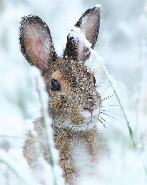Cute rabbit in the snow at winter