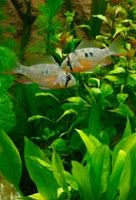 jak karmić ryby akwariowe