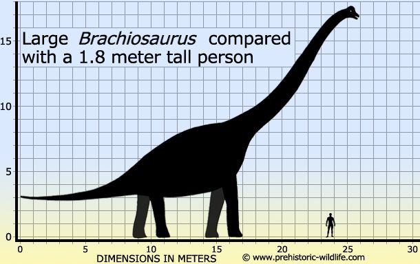 brachiosaurus to scale with human   Dinosaurs   Pinterest ...