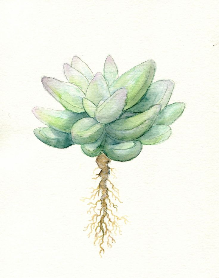 Simple Succulent Print of Original Watercolor by FuzzyLlamas