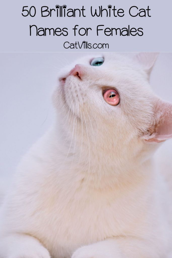 100 Brilliant White Cat Names For Male Female Kitties Catvills Cat Names Cat Names Girl Unique White Cat