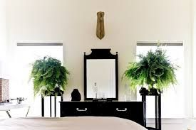 Image result for plant bedroom
