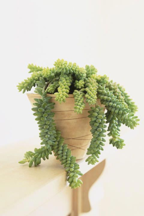 Grow These Unique Indoor Plants To Surprise Your Guests Houseplants