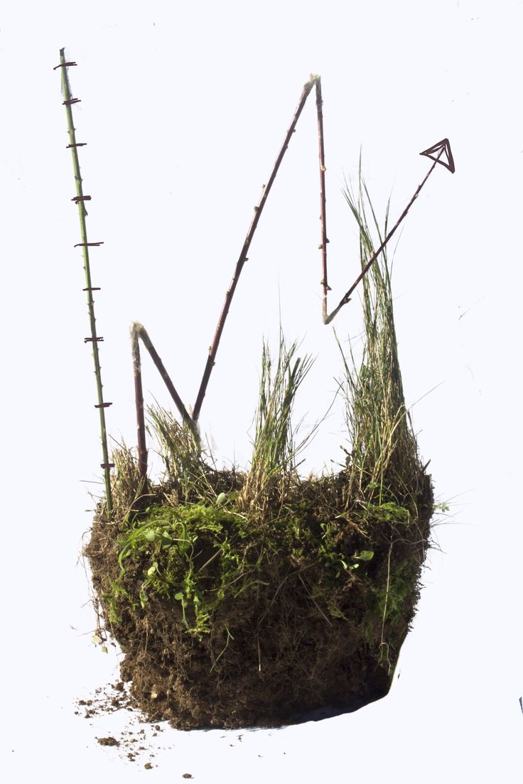 Photo from Bobby Redmond NCAD depicting the connection between nature and growth in Ireland