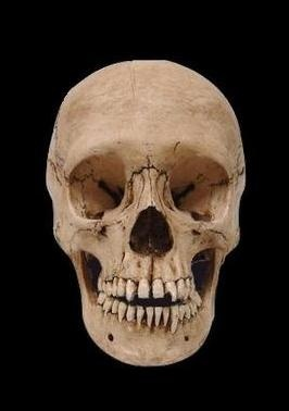 adolescent davey this human skull replica is cast from a natural specimen and has terrific - Halloween Skulls Pictures