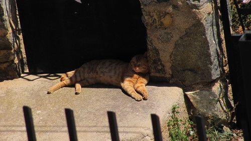 Gato zanahoria durmiendo.