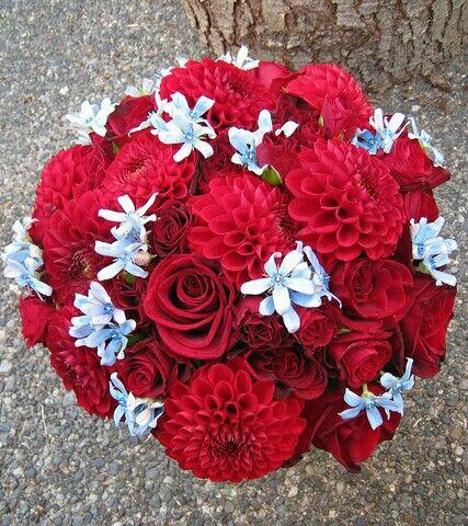 Red Dahlias, Red Roses, Red Spray Roses, Blue Tweedia Wedding Bouquet