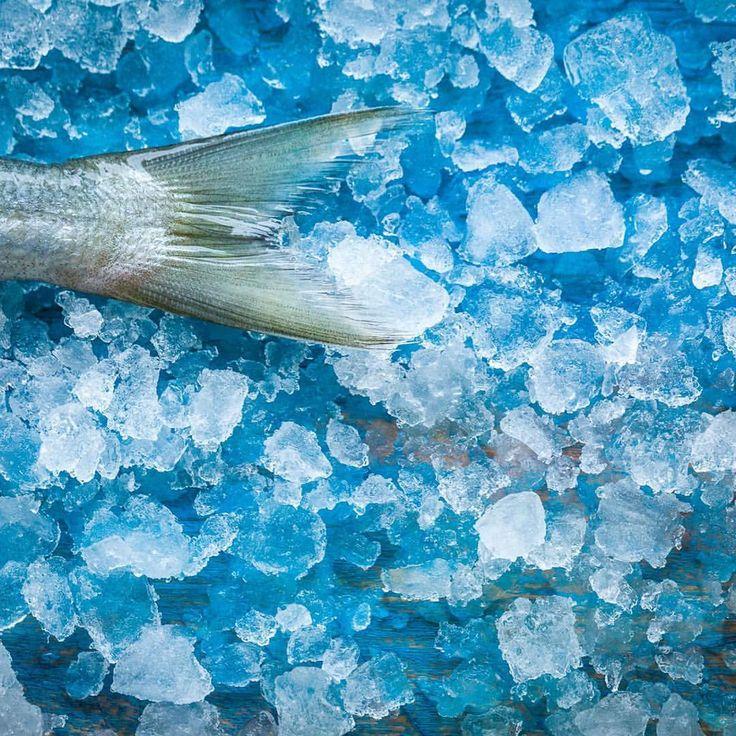 """90 """"Μου αρέσει!"""", 3 σχόλια - Theodosis Georgiadis (@theodosis) στο Instagram: """"Fresh 🐟 fish photo by #theodosisgeorgiadis #foodphotography #fish #fresh #onice❄️"""""""