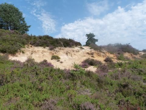 Canford Heath: wet and dry | Nature Notes