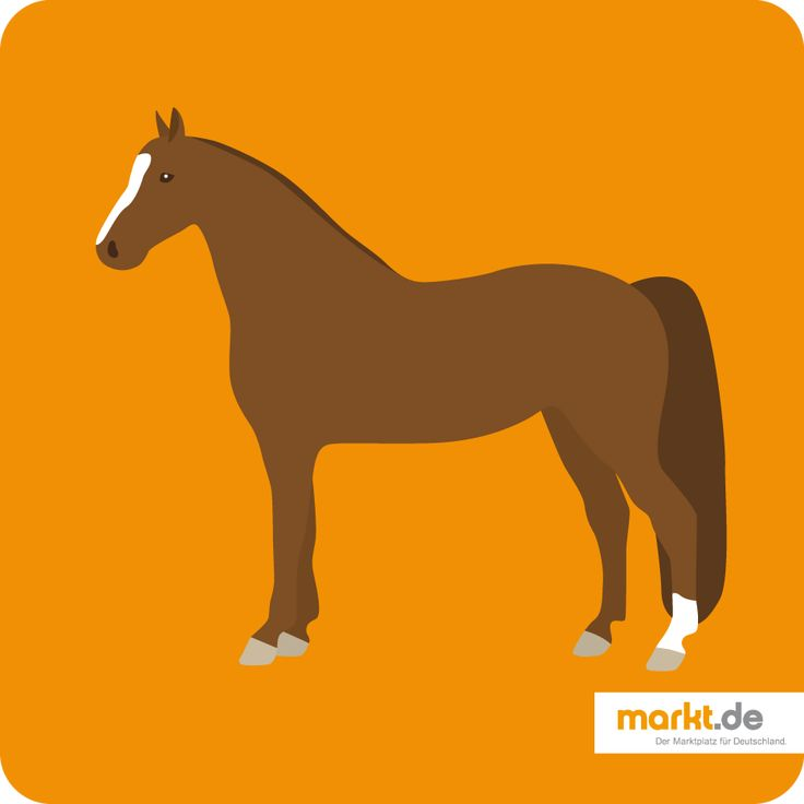 Alles über Gelderländer | markt.de #pferd #portrait #infos #fakten #steckbrief