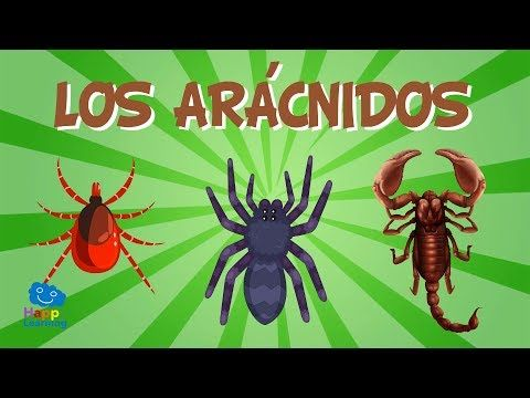 Animales Invertebrados Videos Educativos Para Niños Youtube Videos Educativos Animales Invertebrados Vertebrados E Invertebrados