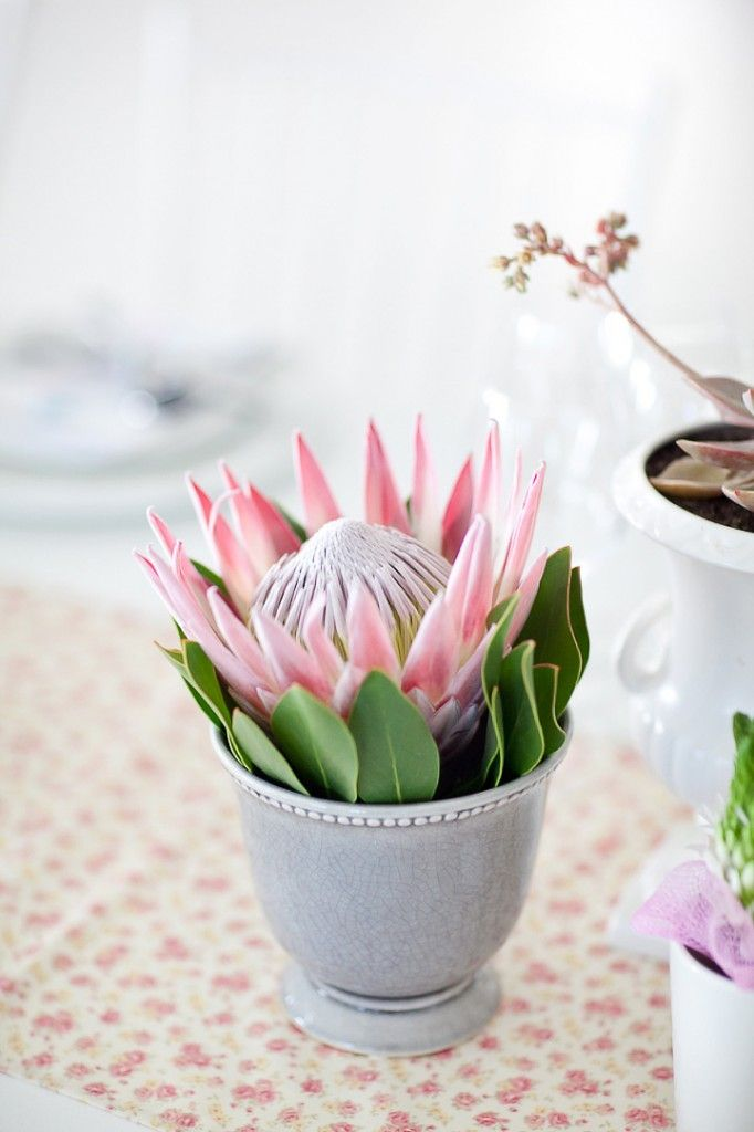 Protea Centerpiece. Simple & stunning.