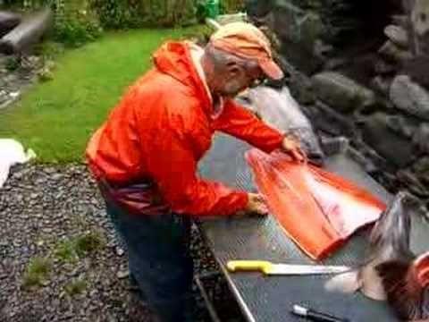 Filleting 2 king salmon