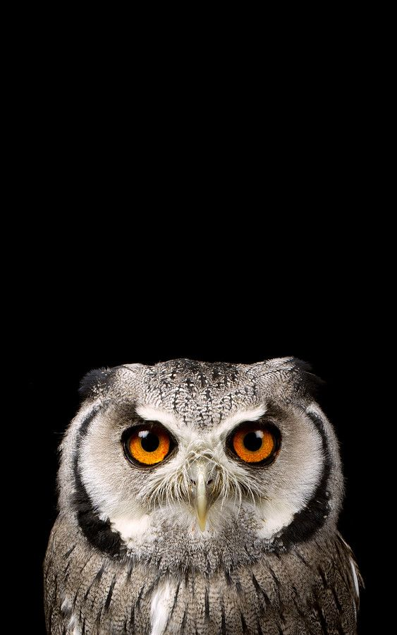 very very bored... by Mark Bridger on 500px