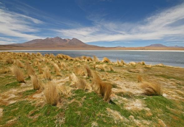 Altiplano, South AmericaFavorite Places, Poker Chips, Apex Planets, South America, Beautiful Places, Altiplano, America Reading, Nature Beautiful, Outstanding Nature