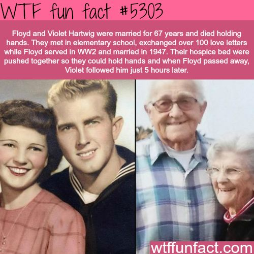 WOW! ...They met in Elementary school, married in 1947 - for 67 years!  Floyd and Violet Hartwig die together while holding hands - WTF awesome & fun facts!