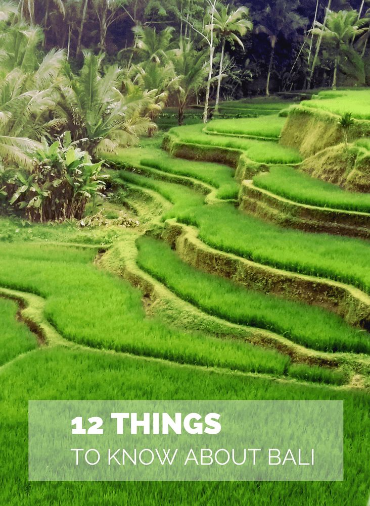 Click here to read about 12 MUST things to know before going to #bali. With those #traveltips your #vaction will be awesome. For more #travelguides on #bali check www.101wordsoftravel.com.