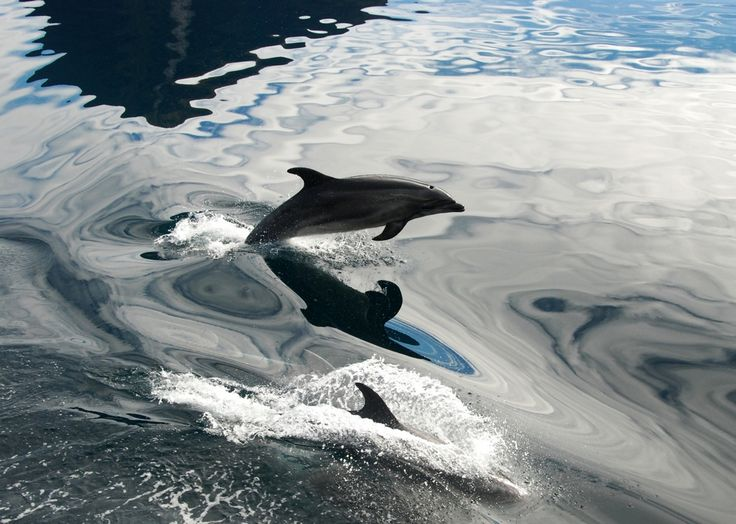 Bottlenose Dolphins are a regular sight on a Discovery Expedition