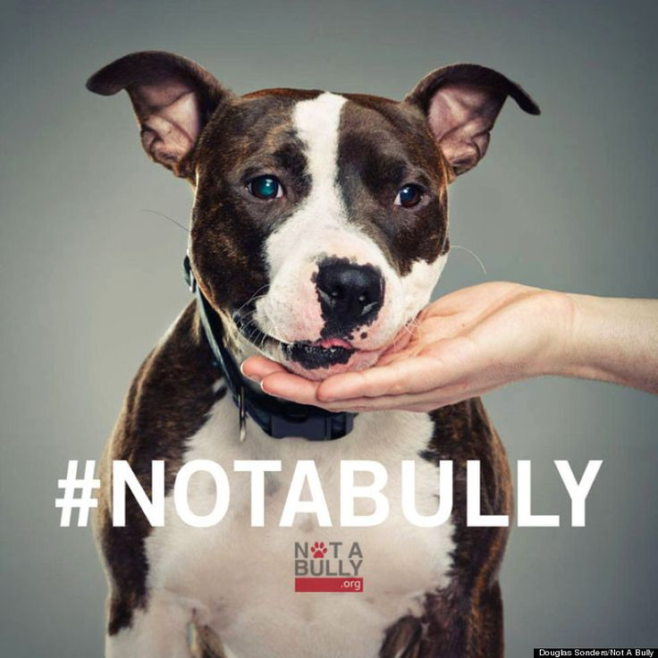 Photographer's #NotABully Campaign Shows Pit Bulls As The Sweet, Loving Dogs They Are. Via @Huffington Post
