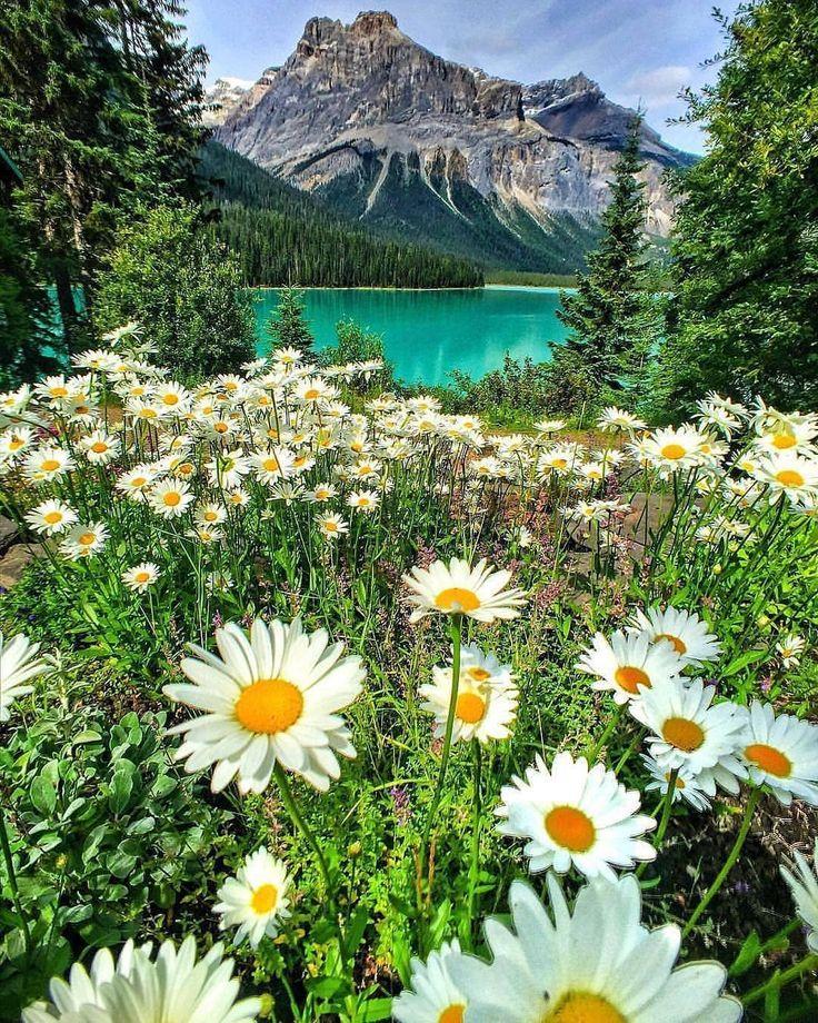 Открытки цветы лес