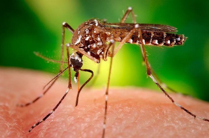 Además del dengue y el chicunguña, el aedes aegypti produce un virus nuevo que pone en alerta a los colombianos. ¿Cómo prevenirlo?