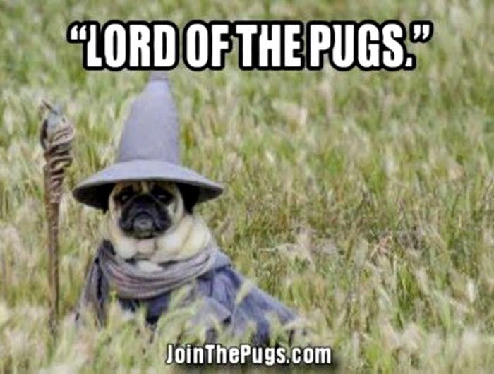 We're pushing for a #LordOfThePugs movie! Who's with us #puglovers? ・・・ www.jointhepugs.com ・・・ #pugpower #pugsnotdrugs #pugpuppy #puglover #dogs #votepug #pugchat #cuteness #pugs #pugrequest #pugnation #dogstagram #dogsofinstagram #puppyeyes #pugstagram #pugworld #pugplanet #pugnation #dogsofinstaworld #petstagram #instadog #instapug #pug #babypug #pugoftheday #pugsofinstaworld #pugsofig #pugsforever #cutedog #worldofpug